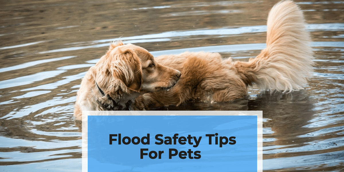 Flood Safety Tips for Pets | Keeping Your Dogs And Cats Safe
